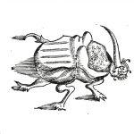 Besouro por Guilherme Piso (1648)
