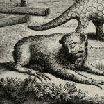 Memorável viagem marítima e terrestre ao Brasil, Johan Nieuhof,1682